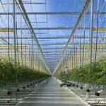 Greenhouse waterproofing rooftop to underground